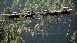 Sharing the River Crossings, Nepal: Quite often high foot bridges across rivers are shared with yaks
